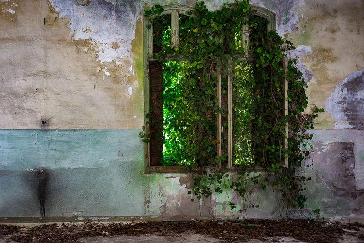 Misteri ke Pulau Poveglia yang Diasingkan, Terdapat Kuburan Masal